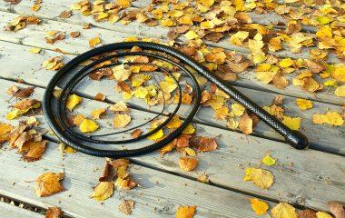 Black leather whip bullwhip